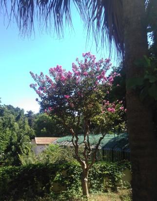 arbre-fleuri-du-jardin-dessaie