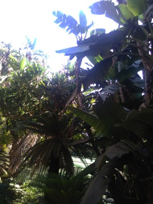arbres-du-jardin-dessaie