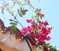 fleurs-sur-un-mur-dalger