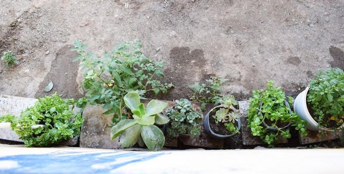 plantes-dans-la-cour-a-bouira