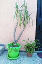 plantes-devant-un-mur-a-kouba