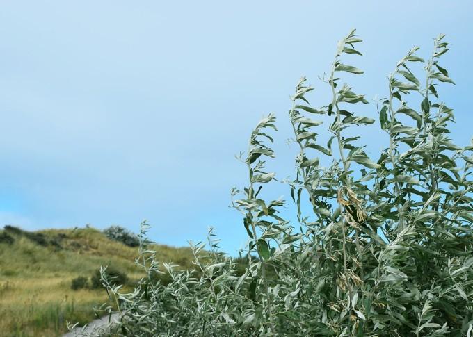 paysage-des-dunes-de-calais