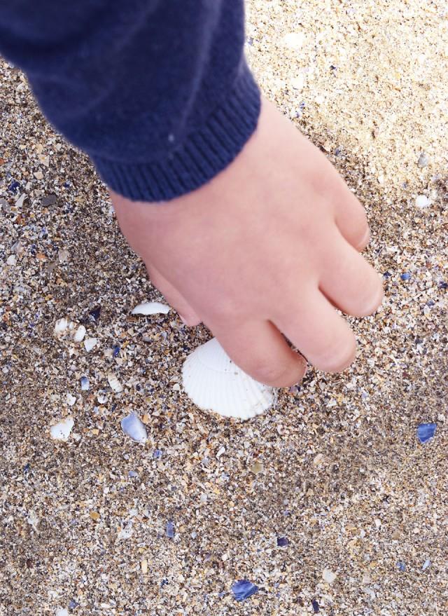 ramassage de coquillages honfleur